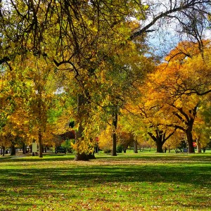 City Park Fall Color Ash Tree | Be A Smart Ash, Denver