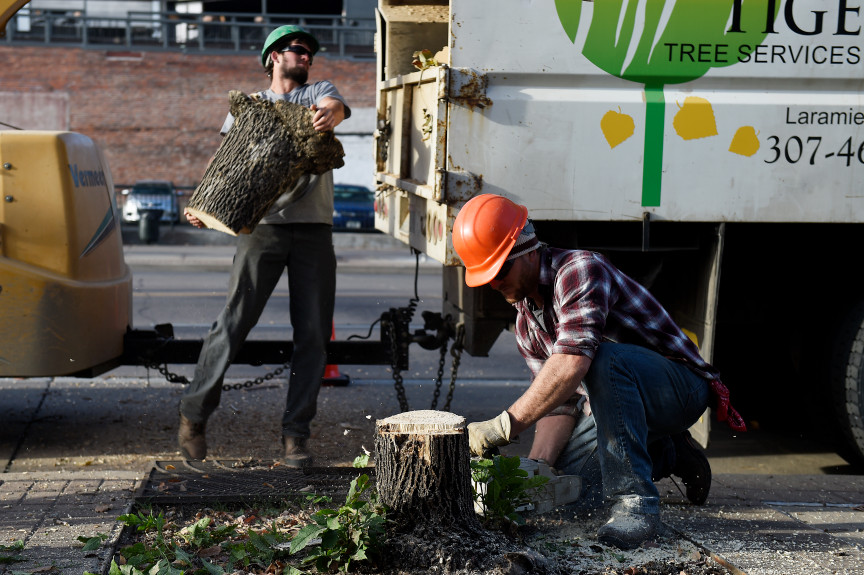Ash Tree, Removal, Be A Smart Ash, Denver, Downtown, Replace