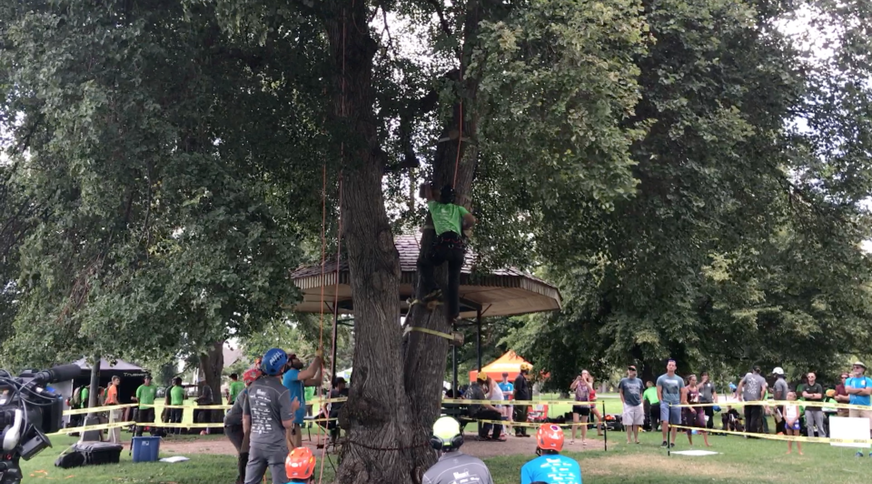 Tree Climbing Arborists Help Raise EAB Awareness