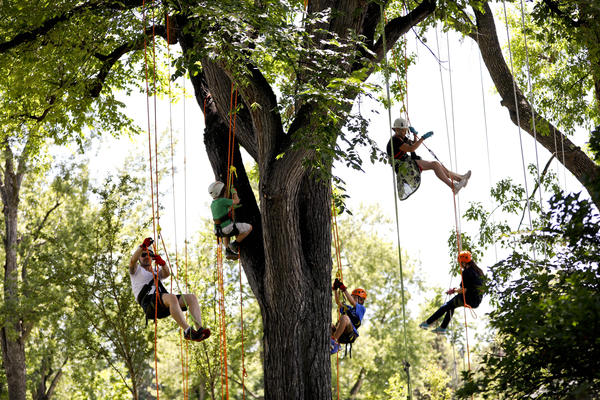 Colorado Tree Climbing Company Raises EAB Awareness